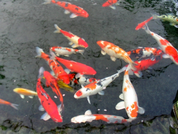 Fish And Pond Supplies At Hawaiian Botanicals