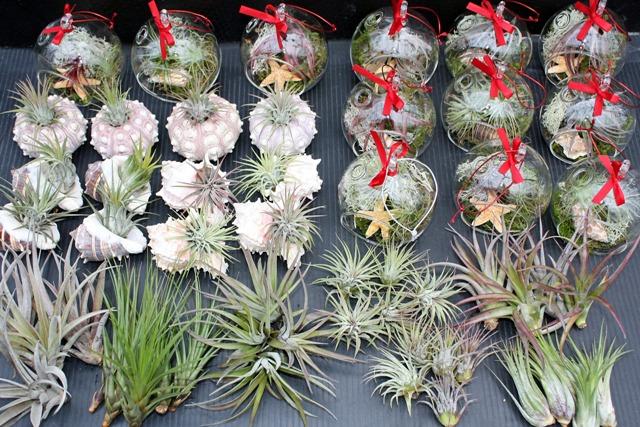 Gift ideas at hawaiian botanicals